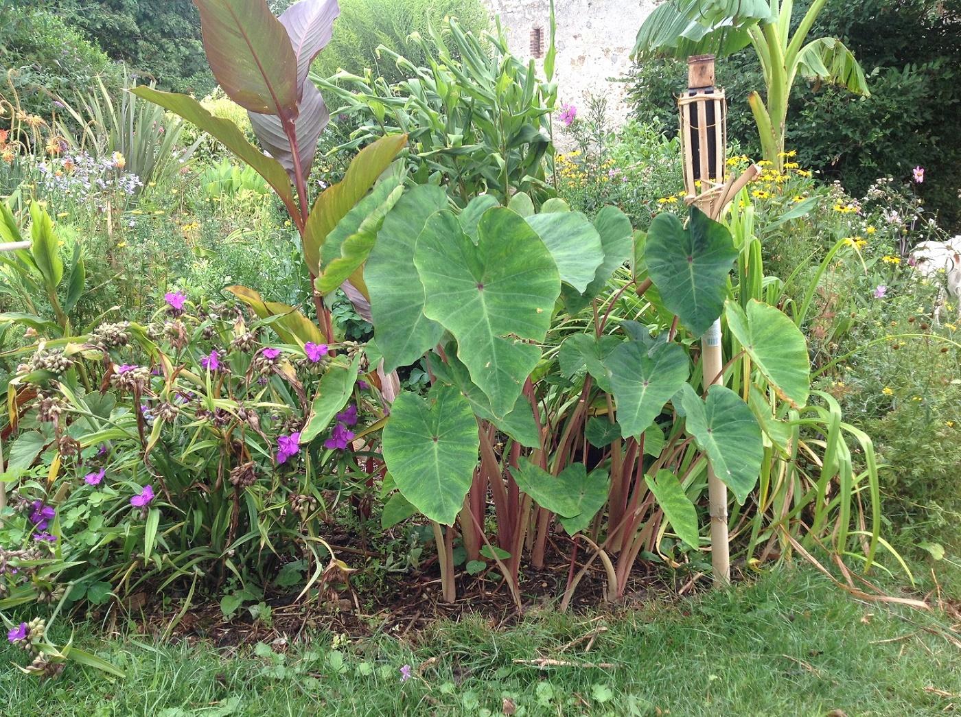 Le jardin d 39 pices un jardin exotique et cologique en for Jardin remarquable ile de france