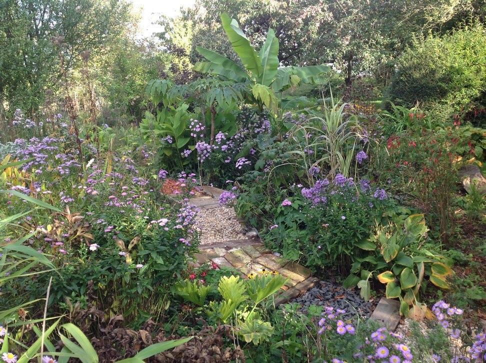 Massif exotique mi ombre le jardin d 39 pices for Le jardin katalog 2015